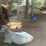 deyri farming