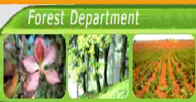 Department of Forest