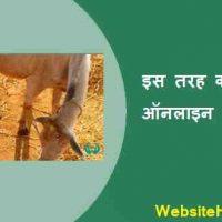गाय भैंस ऑनलाइन खरीद- विक्री कैसे करें?